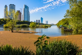 Photo of skyscrapers of the Puerto Madero neighborhood of Buenos Aires, Argentina with the Costanera Sur Ecological Reserve aka Buenos Aires Ecological Reserve on the banks of the Rio de la Plata in the foreground.