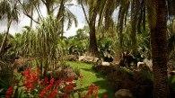 inhotim-botanica-jardim